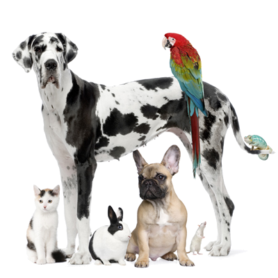 oakleyveterinary in Oakley, California